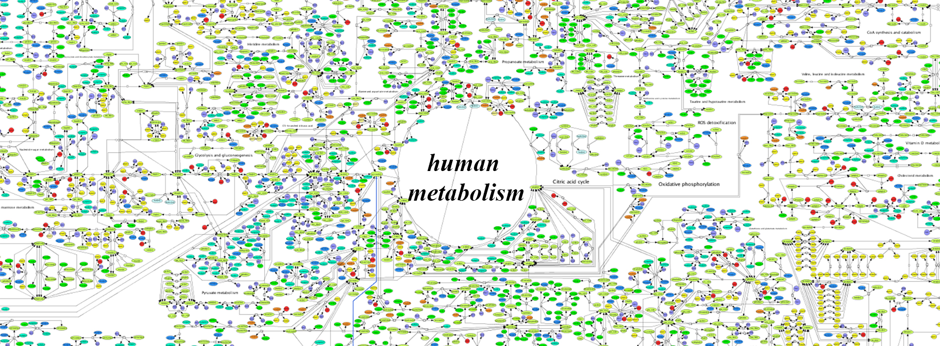 Human metabolism. Menopause changes the balance in our systems and must be reflected by new eating ias we lose weight.